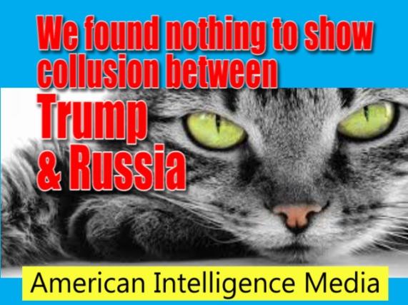 collusion cat