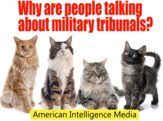 kitties and military tribunals