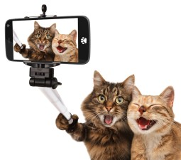 Kitties take selfie