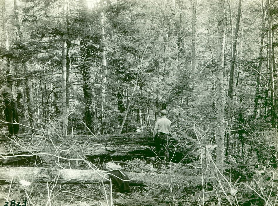 old forest.JPG